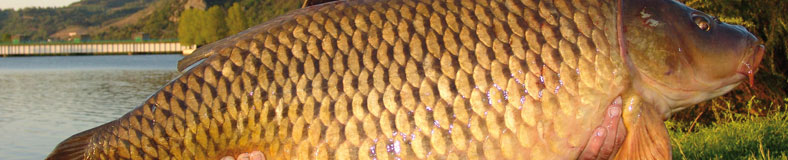 Karpfenschnüre
